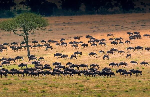 Serengeti Migration - Experience Great Wildebeest Migration in Tanzania